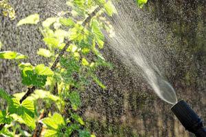 bewässerung3